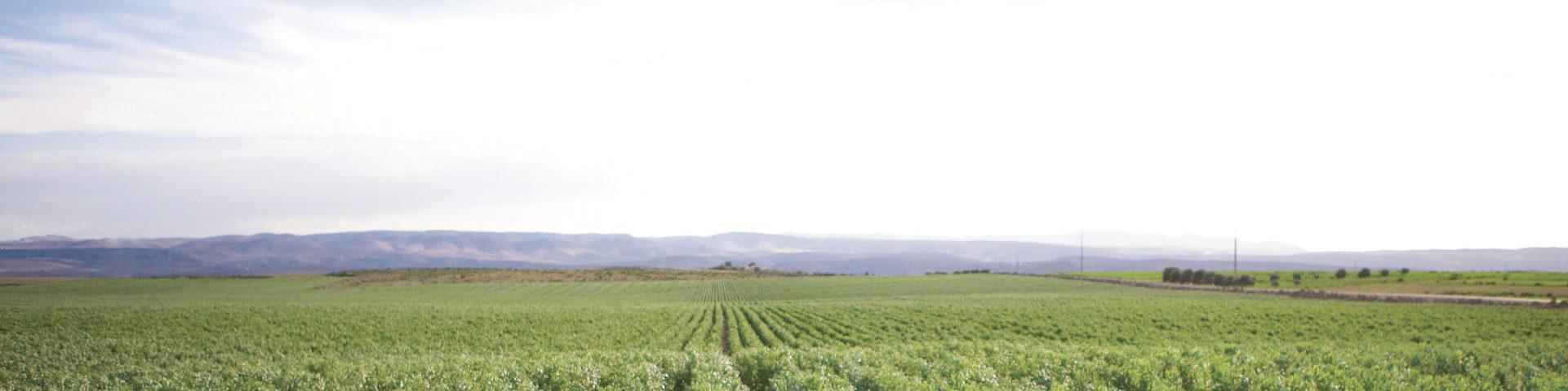 les domaines agricoles l'excellence est notre nature