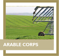 arable corps