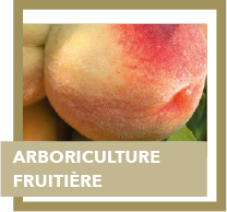 arboriculture fruitiere