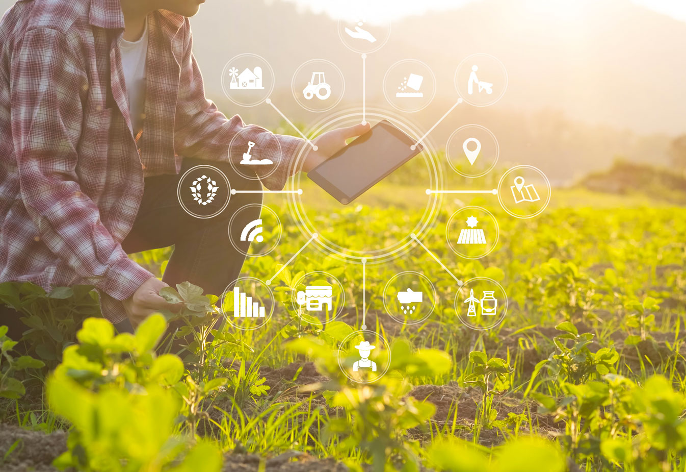 It's digital time for Les Domaines Agricoles